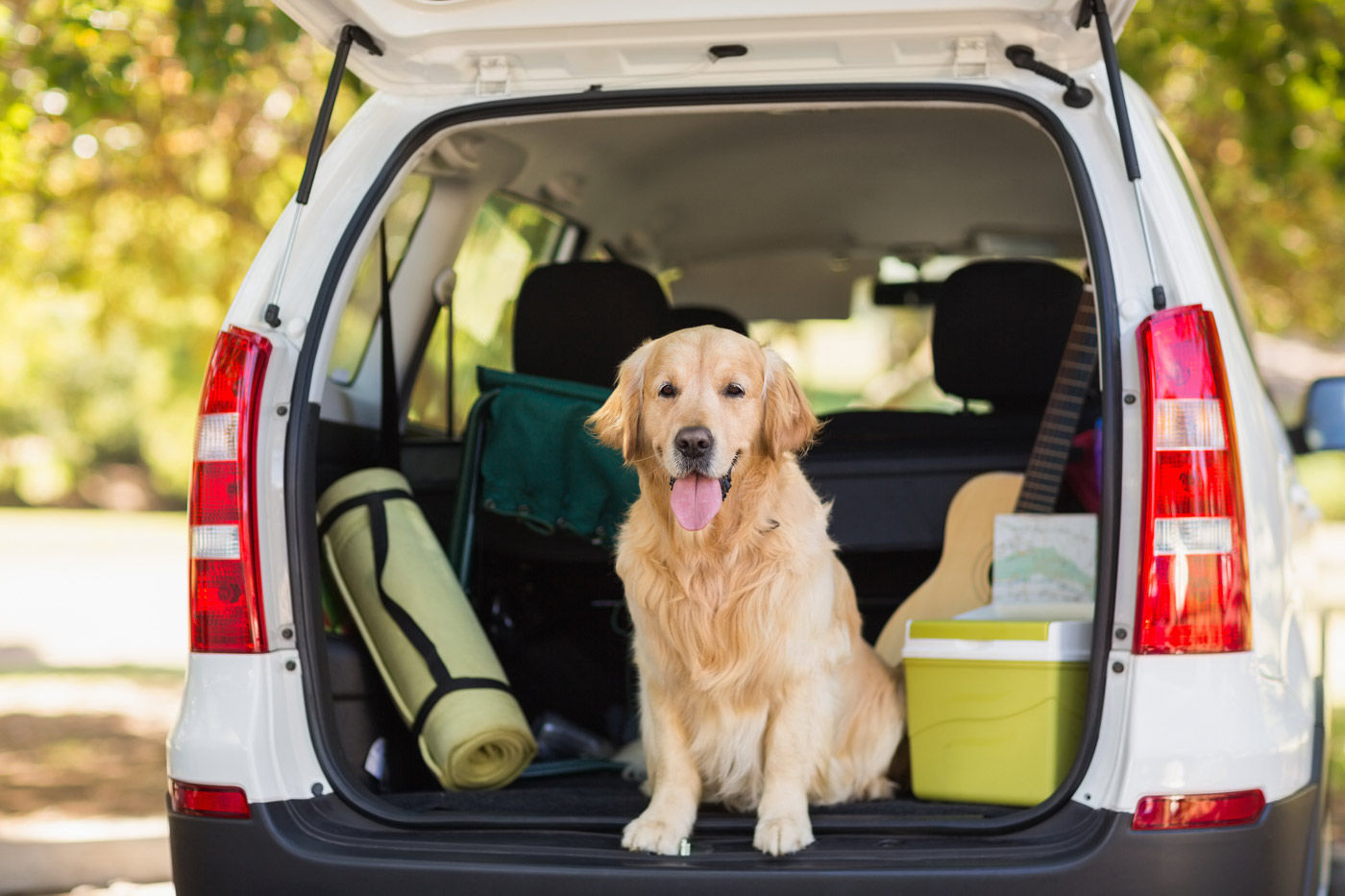 Ensure that your pet will be safe and happy while travelling to our Regina hotel.