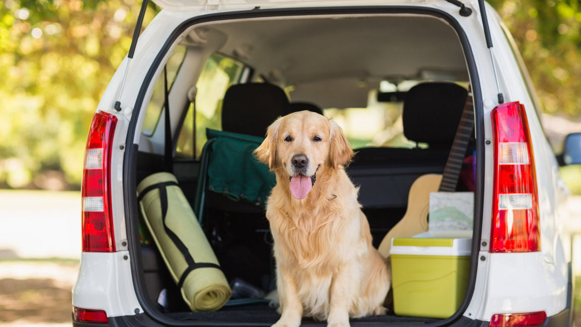 Travelling with Pets: Top Tips from Our Regina Hotel