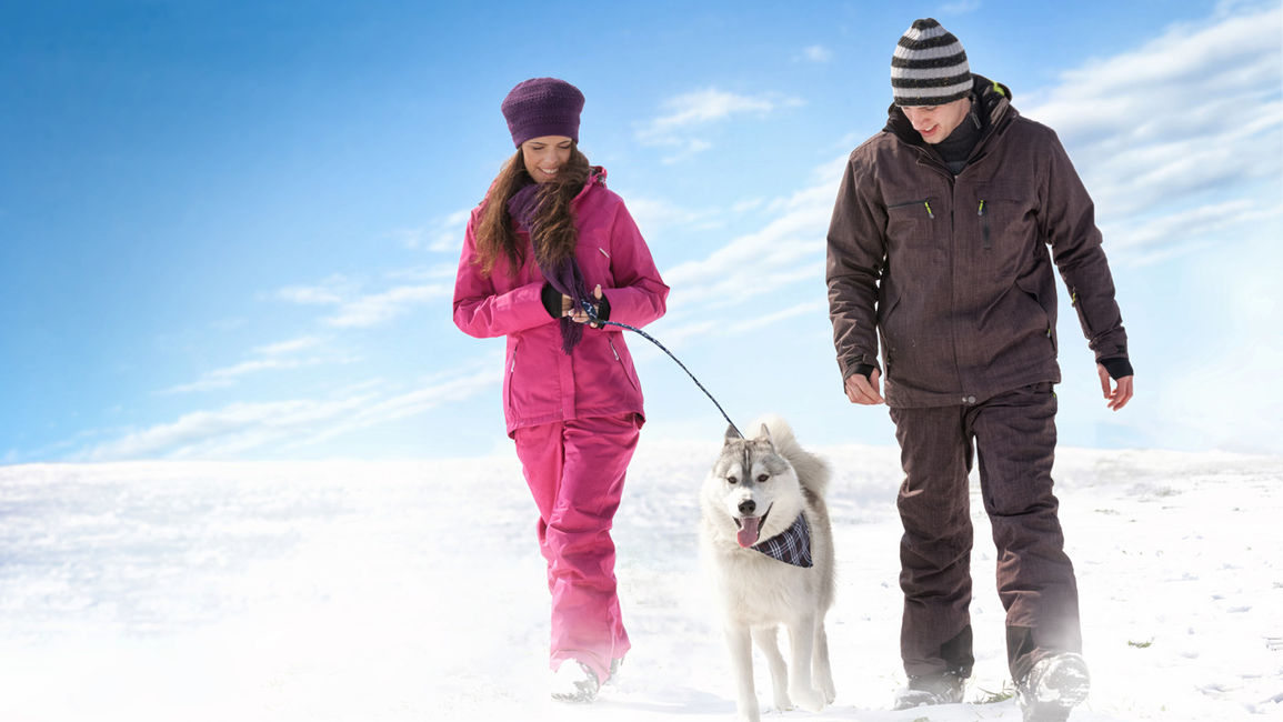 Regina, Saskatchewan Hotels: 4 Must-Know Winter Pet Travel Tips